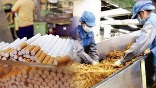 บอกคนที่คุณรักให้เลิกบุหรี่กันเถอะ นี่คือความลับจากพนักงานโรงงานผลิตบุหรี่แห่งหนึ่ง!